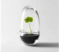 Grow-mini-greenhouse