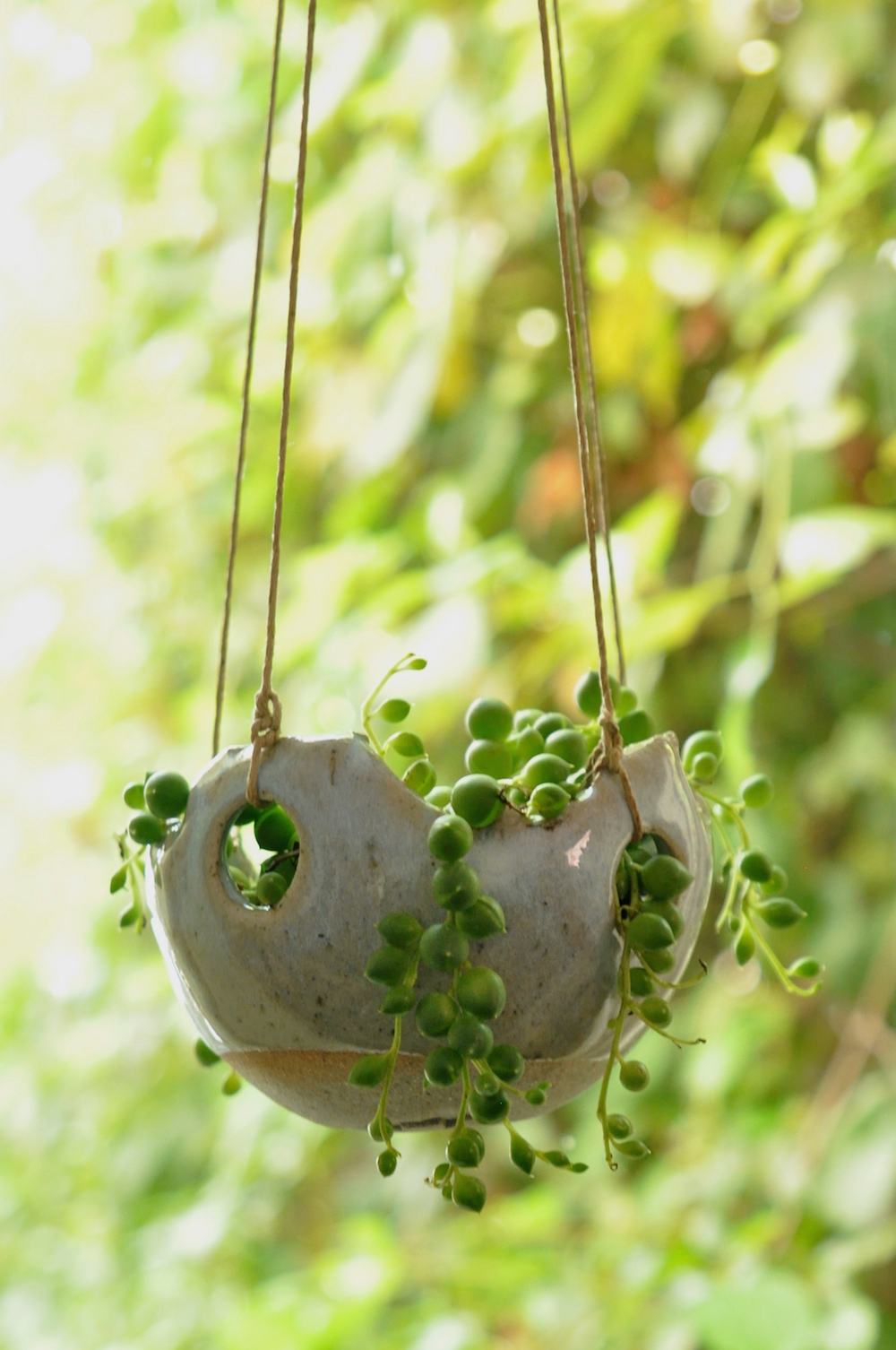 urban jungle bloggers - hanging plants