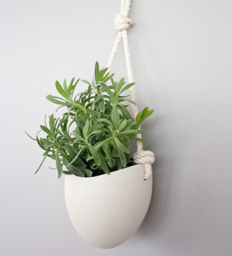 the styled plant giveaway with xo home