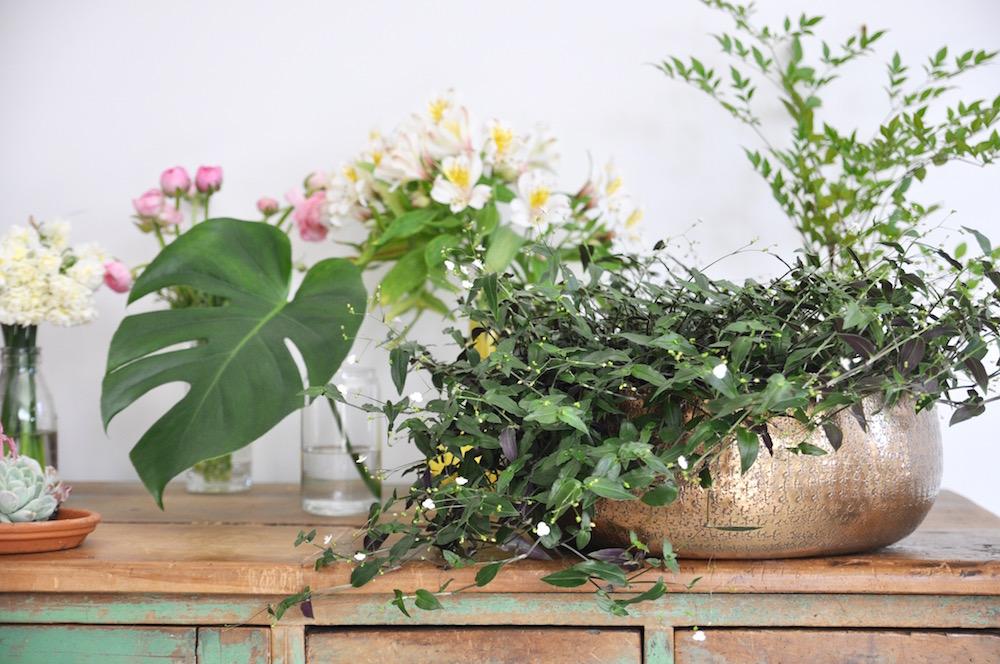 urban jungle bloggers, plants & flowers--
