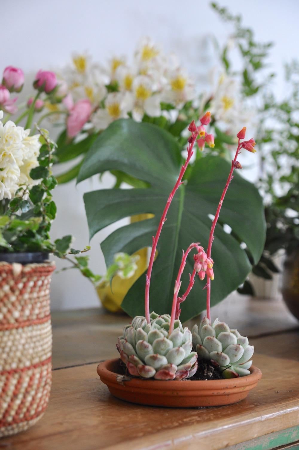 urban jungle bloggers, plants & flowers-