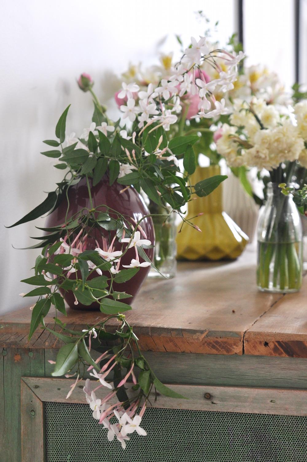 urban jungle bloggers, plants & flowers;