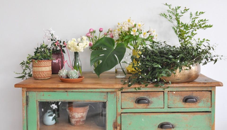 urban jungle bloggers, plants & flowers: